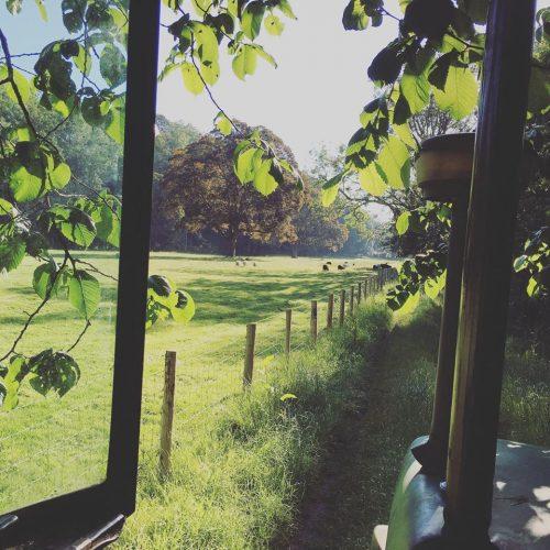 summertime in chapel field